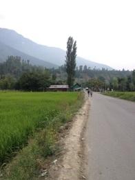En groener, Srinagar nadert