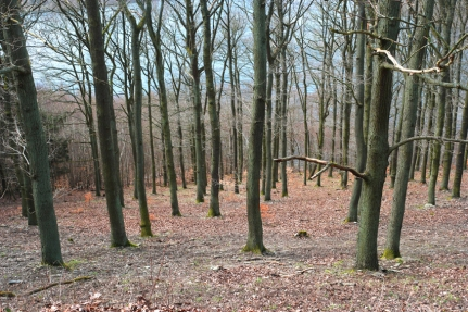 Put on your glasses: lake spotted between trees #Eifel #Germany