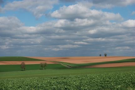 Flanders fields in Germany #Germany