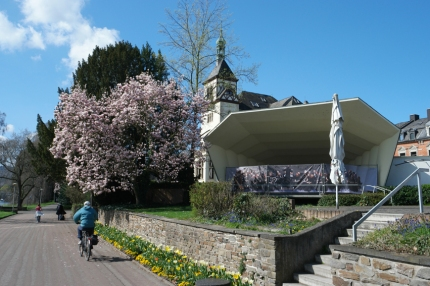 Flowering magnolias all over the place #Rhine #Germany