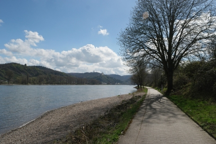 Sandy and pebble beaches are guarded by chattering geese #Rhine #Germany