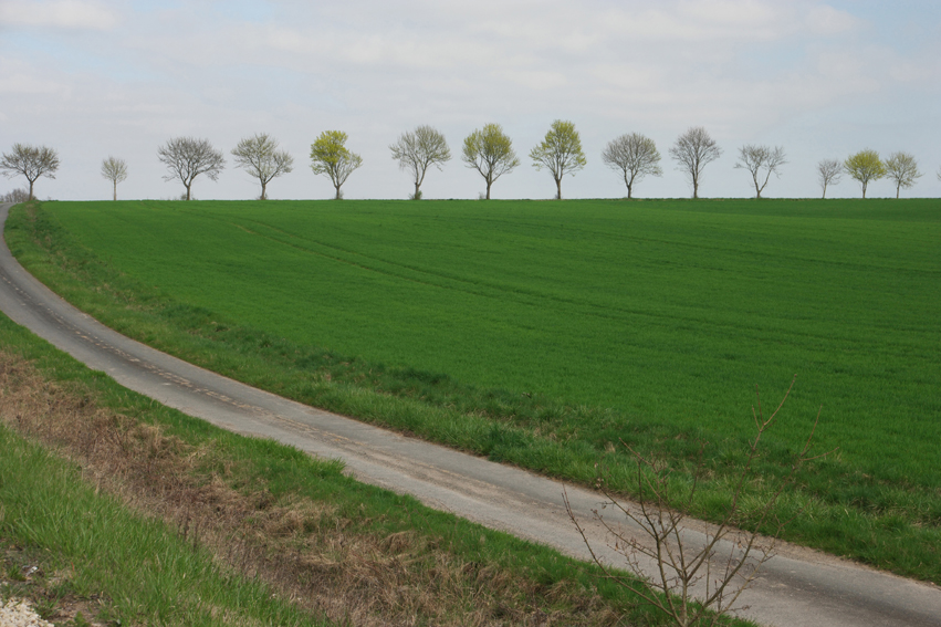 And again, my horizon weakness. Could be Belgium, not? #Germany