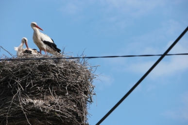 In every town or village storks are nesting. Soon babyboom in Poland, Slovakia and Ukraine