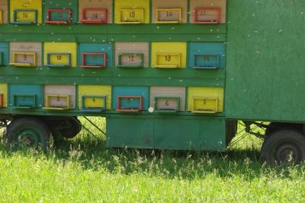 #bees #Romania