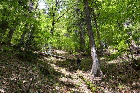 Some trees are over 500 years old #WWF #Romania (picture © Stefan Vasutiu)