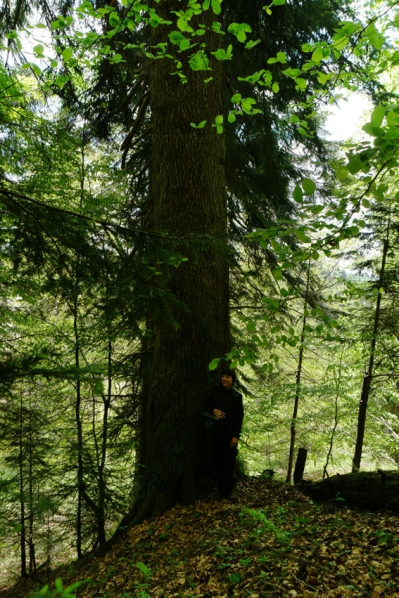 The next day we went to a pristine forest in Strâmbu-Băiuț, situated in Maramures, the heart of the Romanian Carpathians. When you look very good, you see mini me next to the huge tree #WWF #Romania