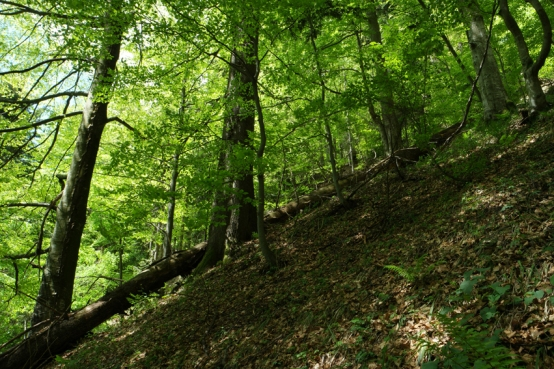 The ecosystem you'll find here is a mature ecosystem. It has all the stages of forest vegetation and of the foodchain of the forest: consumer (animals), producer (all green plants) and decomposer (bacteria, mushrooms) #WWF #Romania