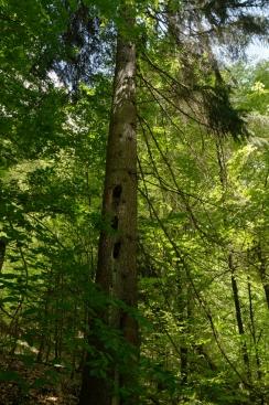 Bird nests #WWF #Romania
