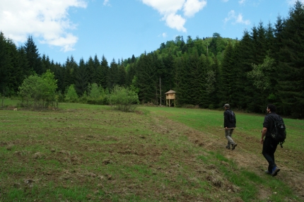 Oat is planted, it varies every year. It can be corn too #WWF #Romania