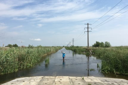 'C'mon doggies, say bye to Calin' Thanks a lot for your help #Danube Delta #Romania