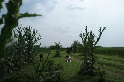 Welcome in thistle paradise #Danube Delta #Romania