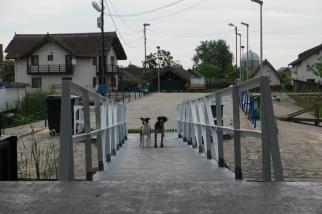 Hey, where are you going to? #Danube Delta #Romania