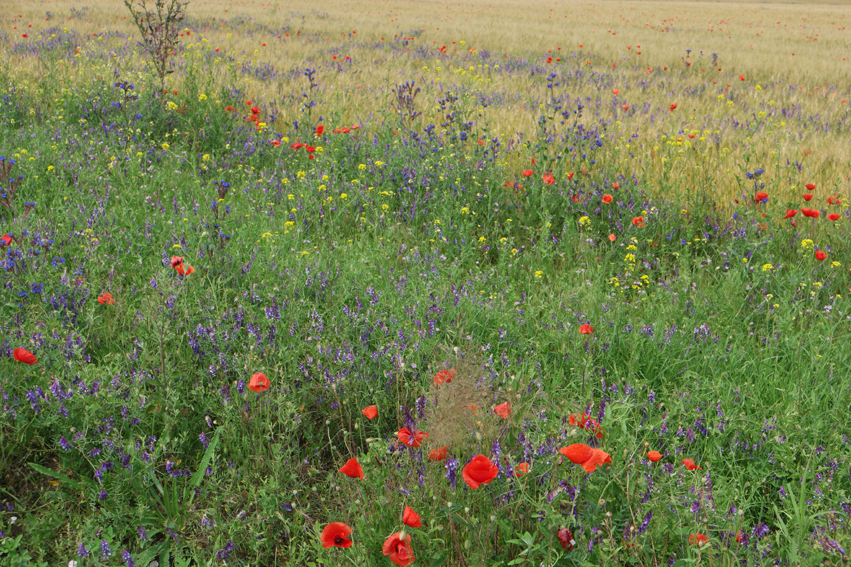 Lovely field bouquets at the side of the road #Romania