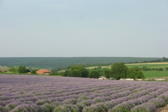 In dutch we say: Living as God in France… euh Bulgaria. Well I did. Lavender and sunflower fields and vineyards all around #Bulgaria