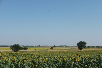 Sunflower fields… Where have I seen these ones too? It looks flat, but it was very hilly #Turkey