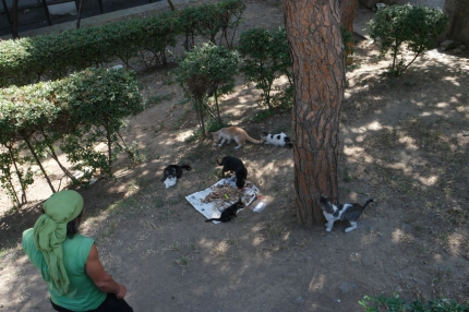 In all corners of the big city people are taking care of streetcats. A lovely thing to see #Turkey