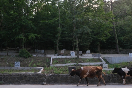 Graveyard #Turkey