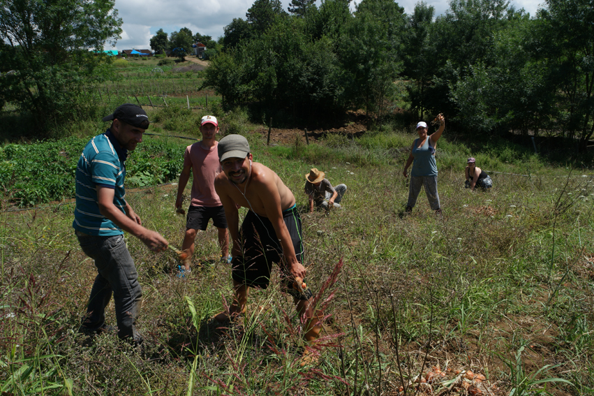 Being part of a diverse, but nice group of volunteers. First day: picking onions #NarköyOrganicFarm #Kerpe #Turkey