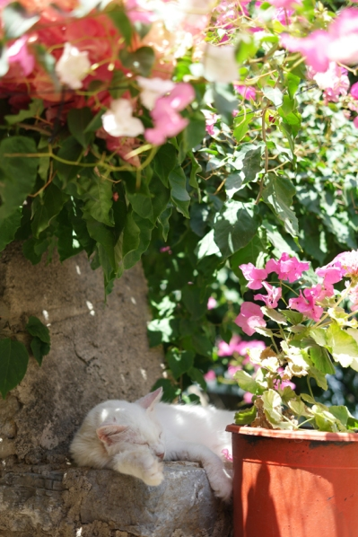 But it had cosy corners and sweet cats #EskiDatça #DatçaPeninsula #Turkey