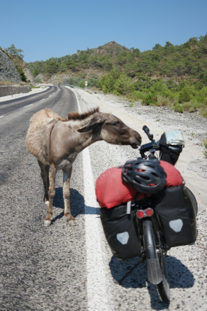 This lost donkey crossed the street to say hello to me. He was so much in need of attention and water. I gave both #BozburunPeninsula #Turkey