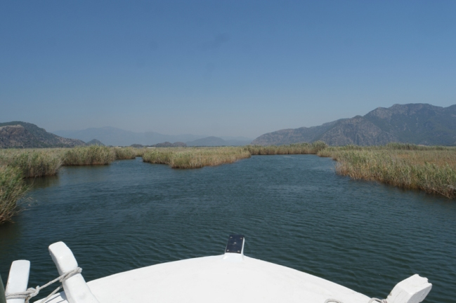 I was bored not doing and seeing anything. The third day I decided to do a boat trip on the lake #Dalyan #Turkey
