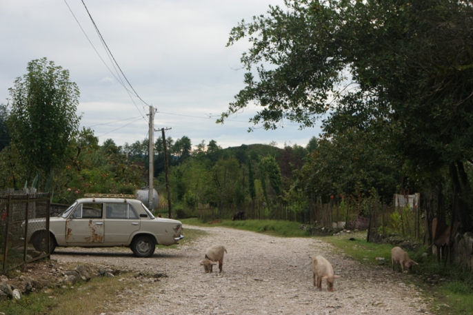 This is so #Georgia! Village road with shabby lada and piglets walking around