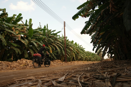 I was super excited when riding along banana plantations #Oman
