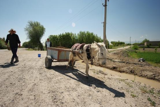 #uzbekistan