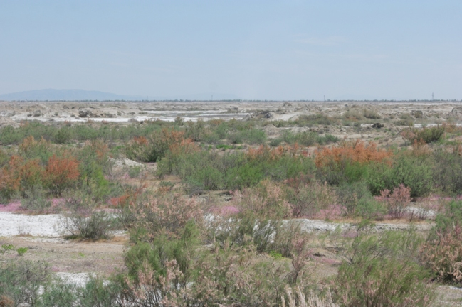 17 million years ago the area was just an ocean. That's why the soil is so salty #uzbekistan
